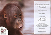 Sponsorship-OrangutanAdoption-Info-165px